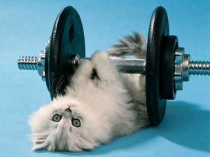 cara agar kucing berolahraga, kucing pakai barbel, dumble